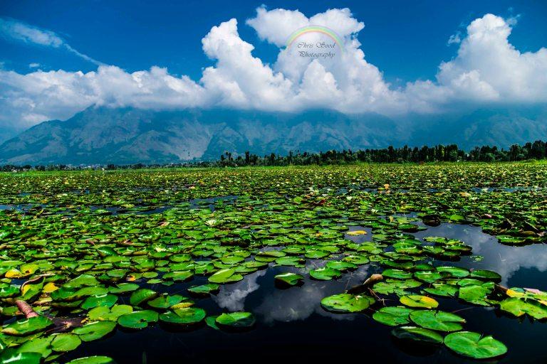 Blog-waterlillies.jpg