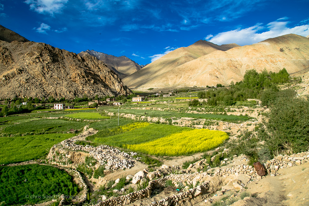 Leh_day_2 (1 of 1)-121.jpg