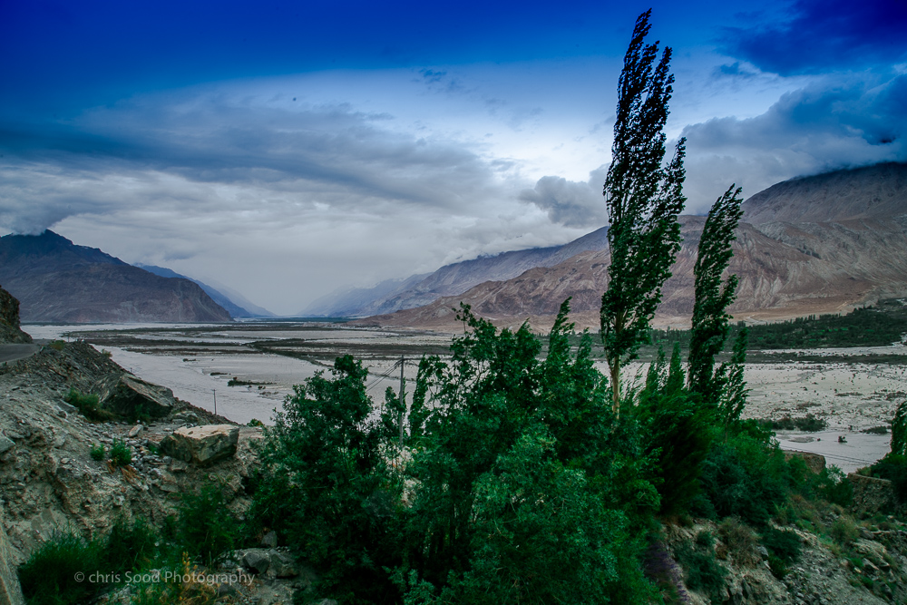 Day3 Nubra (1 of 1)-21.jpg