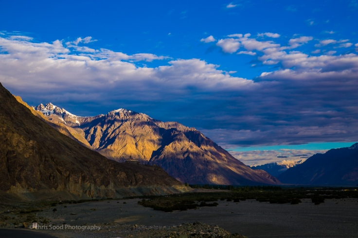 Day3 Nubra (1 of 1)-105.jpg