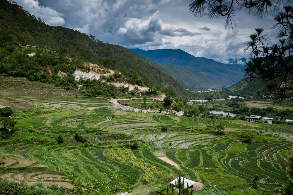 Punakha Blog  (1 of 1)-158.jpg