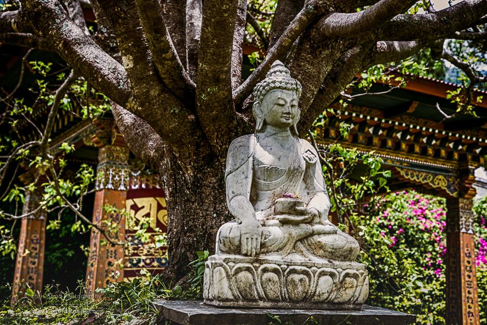 Punakha Blog  (1 of 1)-65.jpg